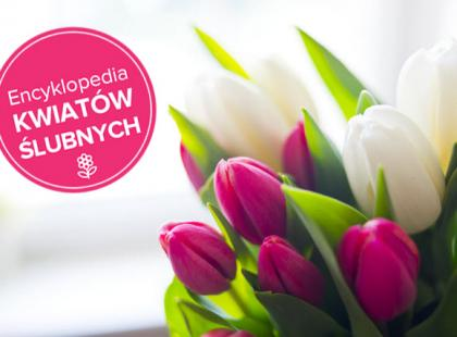 Tulipany na ślub