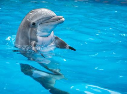 Turyści wyjęli z morza małego delfina i robili sobie z nim zdjęcia. Zwierzę zdechło w męczarniach