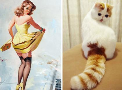 Tym kotom nie można odmówić wdzięku! Wyglądają jak prawdziwe pin-up girls!