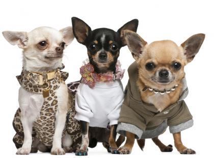 Ubranka dla psa - fanaberia czy pragmatyzm?