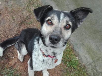 Uratowali bezdomnego psa od śmierci. Urząd gminy w Drobinie ucieka od odpowiedzialności?