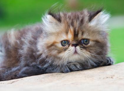 Uraz miednicy u kota w wyniku potrącenia –  jak pomóc zwierzakowi?