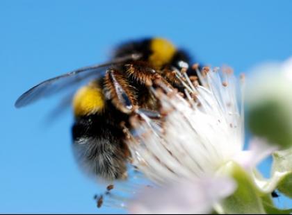 Uwaga - pszczoły!