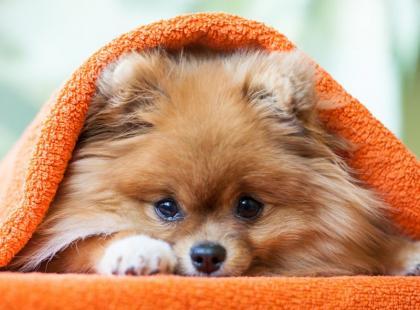 Uwaga! Tych 11 produktów absolutnie nie może jeść twój pies