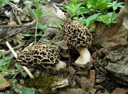 Uważaj na grzyby chronione!