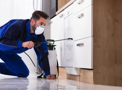 Uważaj na pluskwy domowe! Mogą się pojawić także w zadbanym i czystym mieszkaniu