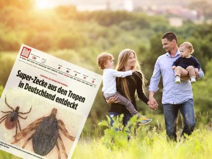 W Niemczech znaleziono ogromne kleszcze przenoszące gorączkę krwotoczną. Czy dotrą też do Polski?