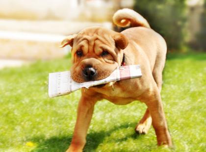 Wakacyjna opieka dla zwierząt