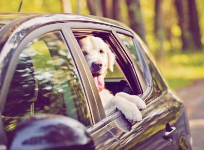 Weekend majowy z czworonogiem? Zobacz, jak przygotować zwierzę do podróży!