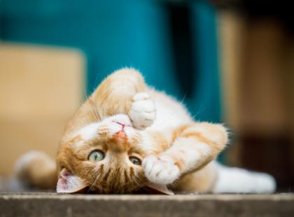 Wiek kota - jak go obliczyć?