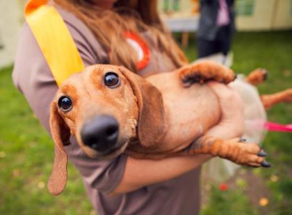 Wiesz, że masz swoją psią drugą połówkę? Znacie się już?