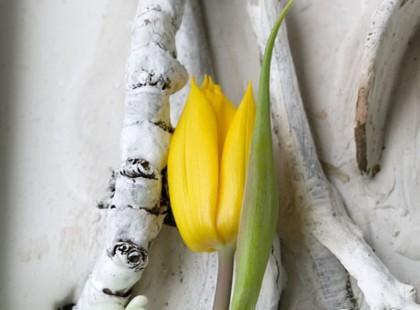 Wiosenne aranżacje kwiatowe