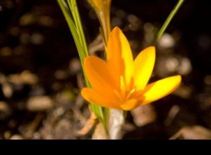 Wiosenne przesilenie