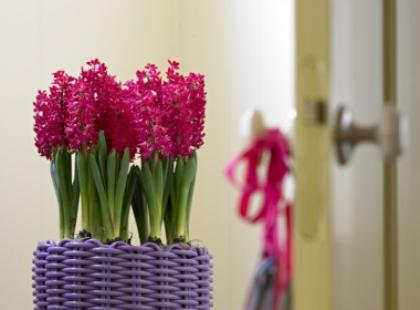 Wiosna w Twoim domu!