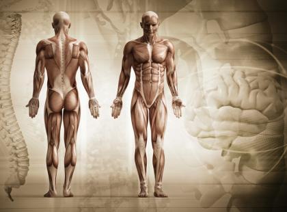 Anatomia człowieka/fot. Fotolia