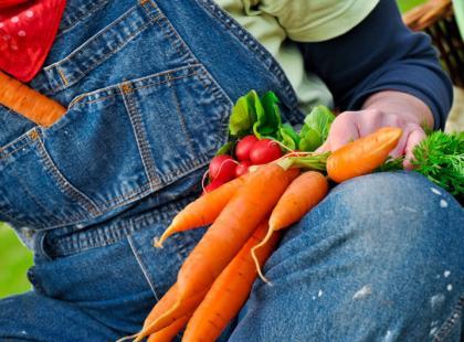 Własny warzywniak krok po kroku