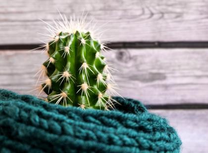 Woda z kaktusa to nowa woda kokosowa? Czy warto ją pić?