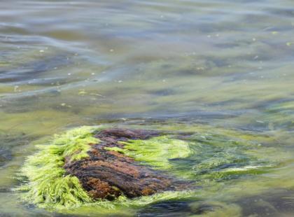 Wodorosty - skarb mórz