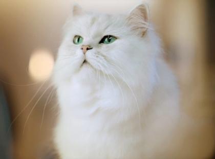 """Wyniki konkursu """"Mój uroczy kot"""""""