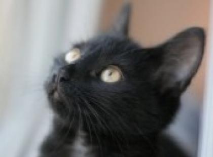 Z życia kota – odc. 1