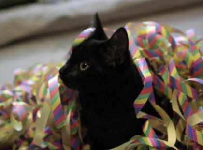 Z życia kota – odc. 10