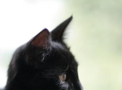 Z życia kota – odc. 4