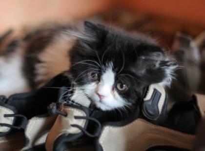 Z życia kota – odc. 7