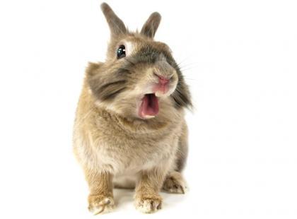 Za co kochamy króliczka wielkanocnego?