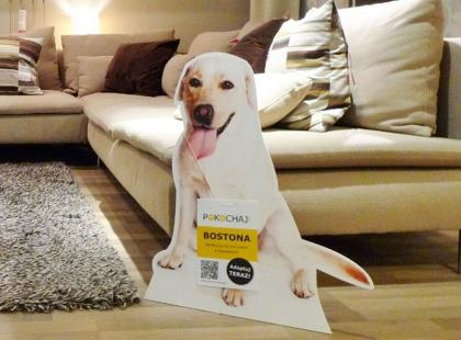 Zaadoptuj psa razem z IKEA! Wyjątkowa akcja w sklepach!