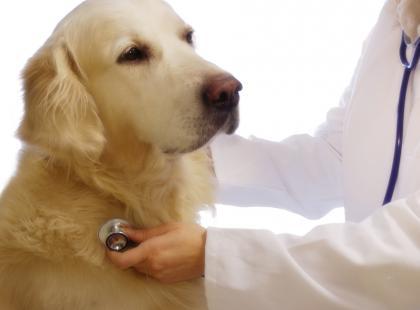Kaszel może być spowodowany czynnikami zakaźnymi - wirusami, bakteriami lub pasożytami.