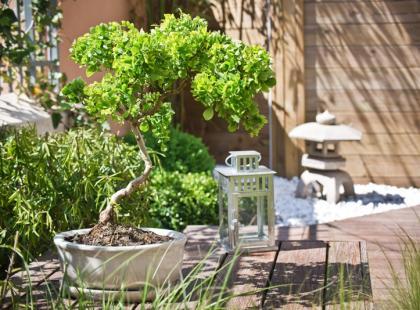 Zachwyć się sztuką bonsai!