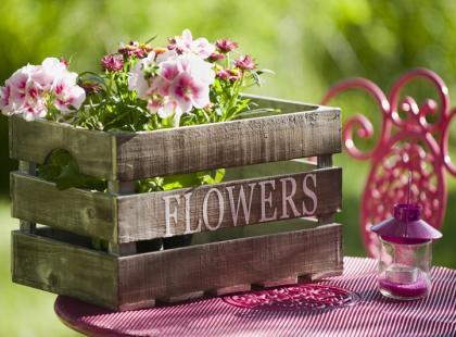 Zadbaj o kwiaty, które zakwitną latem!