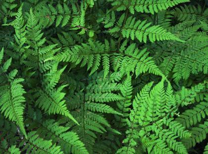 Zanieczyszczone powietrze? NASA ogłosiło listę roślin, które oczyszczają atmosferę z groźnych toksyn!