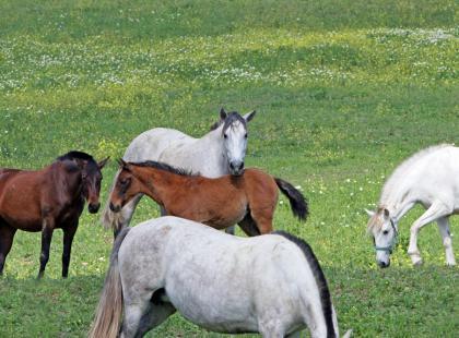 Zaprzyjaźnij się z koniem, czyli hipoterapia