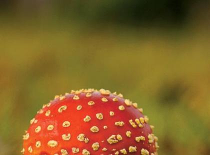 Zatrucie grzybami