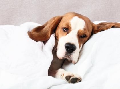 Zdrowie psa - poradnik