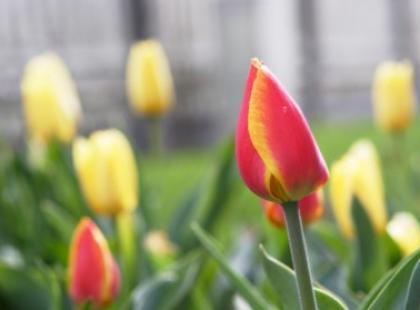 Zimowy pierwszy dzień wiosny