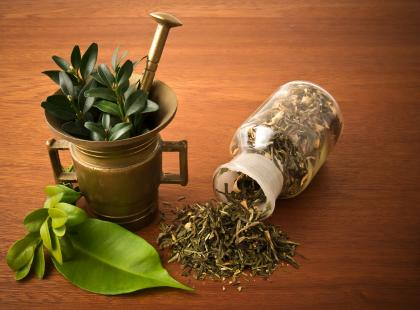 Zioła i rośliny lecznicze – vademecum