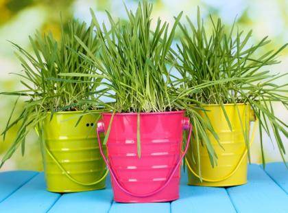 Zobacz jakie doniczki metalowe warto wybrać, aby podkreślały urodę kwiatów i zapewniały im dobre warunki wzrostu