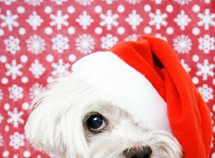 Zostań Mikołajem dla zwierząt!