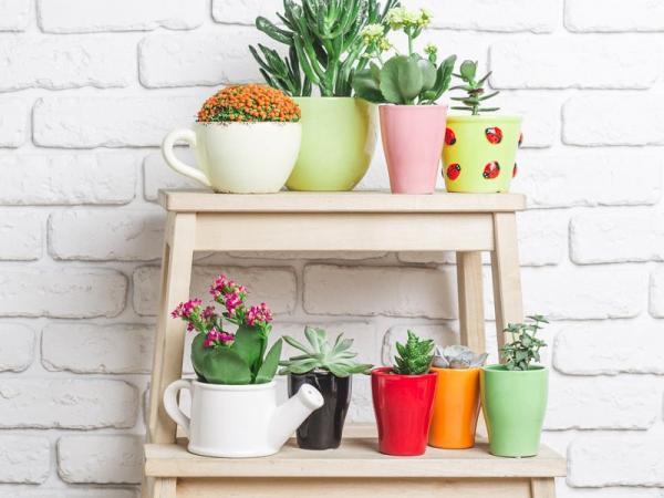 6 roślin, które trudno zmarnować: idealne dla zapominalskich