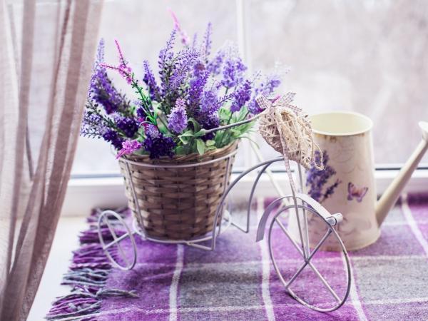 Odrobina Prowansji w twoim domu, ogrodzie lub na balkonie. Zobacz, jak uprawiać lawendę!