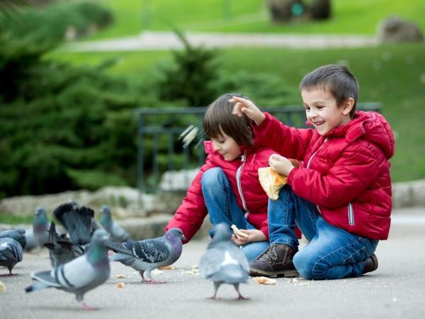 Twoje dziecko karmi gołębie? Uważaj, kontakt z nimi może być bardzo niebezpieczny!