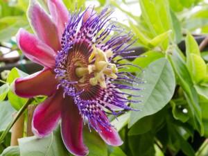 Egzotyczne Kwiaty Doniczkowe Do Domu Np Kwitnące Porady Domowe
