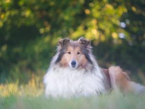 12 najsłynniejszych imion dla psów, które spopularyzowali pisarze i fimowcy