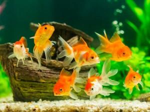 3 życzenia złotej rybki