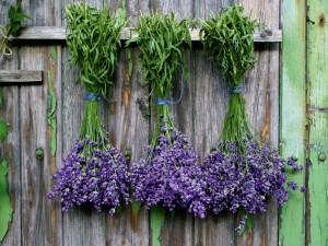 4 najlepsze zioła na nerwy. Sprawdź, jak je stosować!