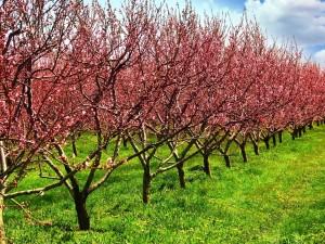 5 sadzonek drzew owocowych, które warto mieć w ogródku