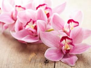 6 sprawdzonych sposobów na to, jak pielęgnować storczyki