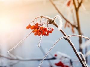 jakie rośliny są ładne zimą, jakie rośliny ładnie wyglądają zimą, rośliny zimowe